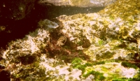 FotosRGES: Crab-under-water-[HR-2004]-RGES